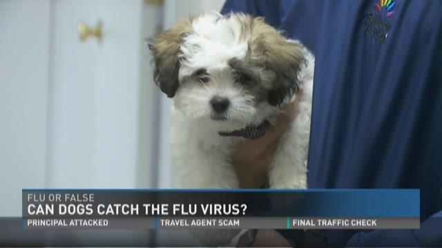 Can Dogs Get Flu Shots