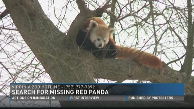 Search for missing red panda at the Virginia Zoo ...